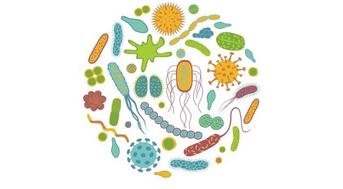 Conosci il microbiota?